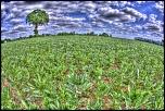 Naissance-arbre-trinite-et-plantation.jpg