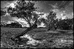 Naissance-arbre-apocalyptique.jpg