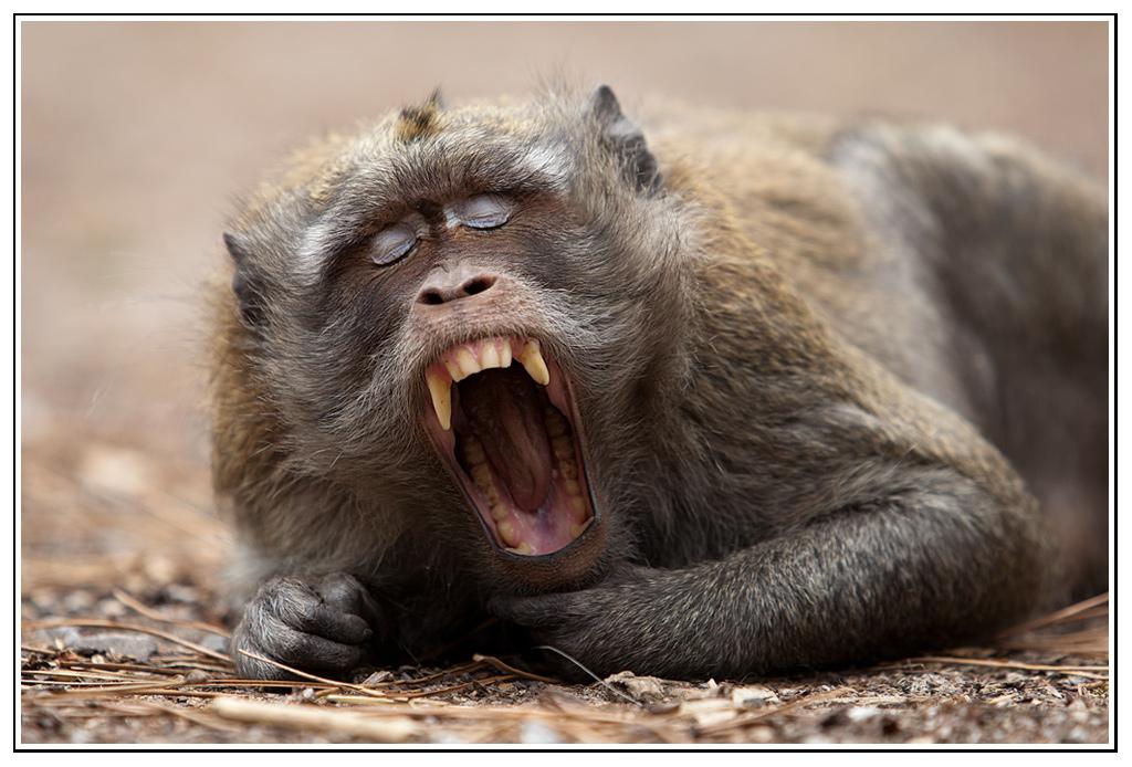 -macaque-19-.jpg