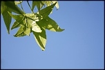 LEAF IN THE SKY2