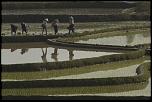 Thème du 24-05-2004 au 06-06-2004-riziere-inondee-8.jpg