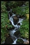 Kéké - C? Nr.: 3 [FINI]-cascade-dans-le-bois-d-alsace_9005.jpg