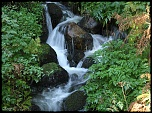 -une-mini-cascade-dans-le-bois_9007.jpg