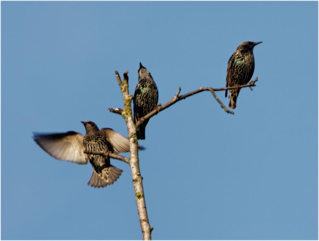 -oiseaux-2011-10-16.jpg