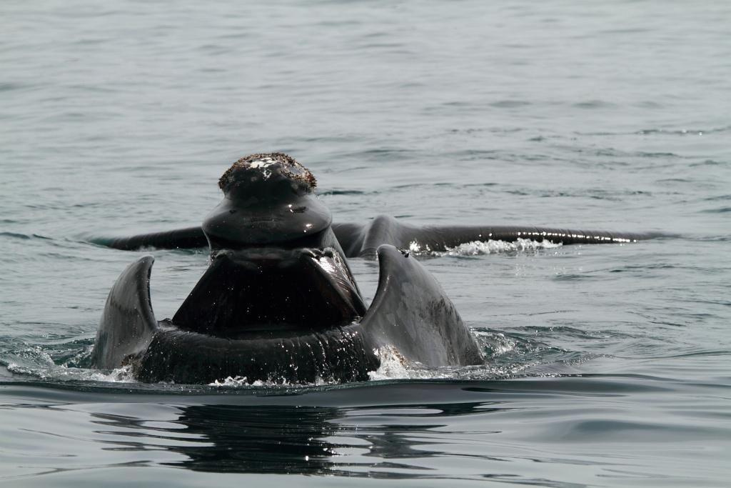 -baleine1582reduit.jpg