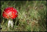 Mon Matos-champignon.jpg