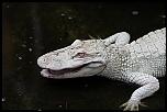 Ferme aux Crocodiles