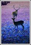 Concours Photo-bambi.jpg