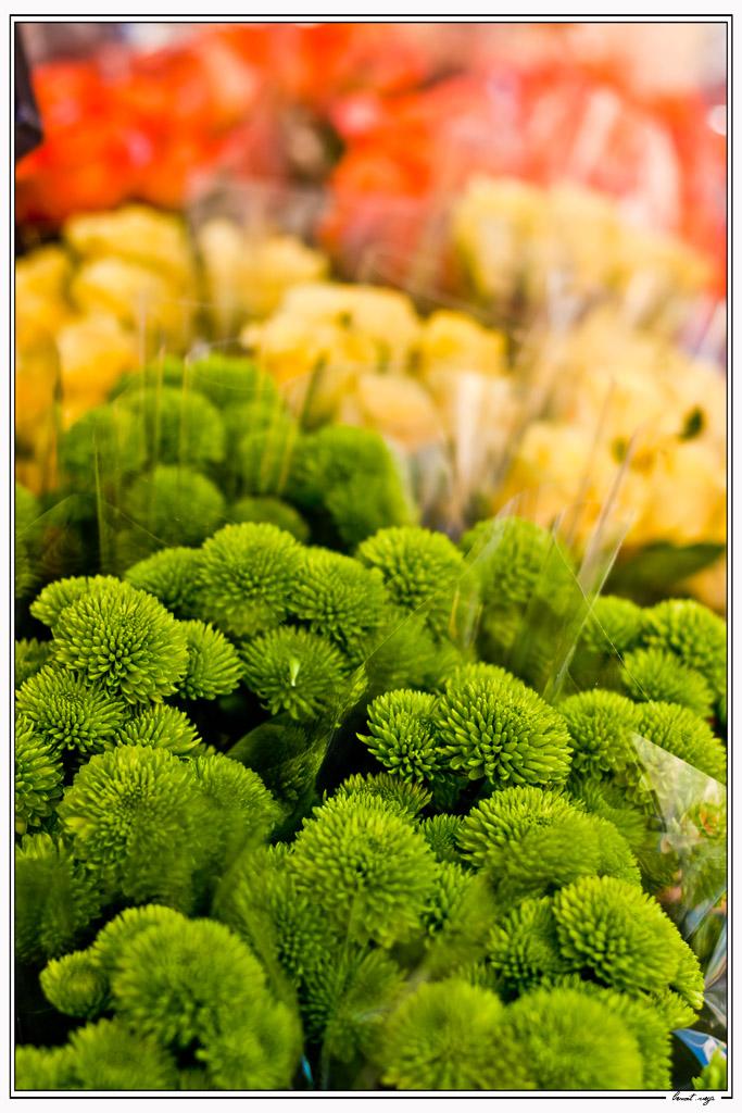 Concours Photo-flower.jpg