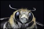 Nouveau Firmware-abeille-1.jpeg