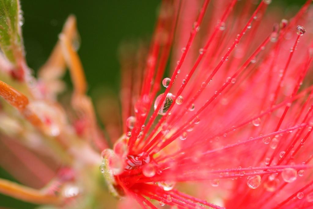 Faune - Flore
