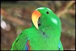 Parc des Oiseaux à Villars les Dombes