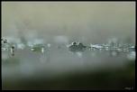 Kéké - C? Nr.: 3 [FINI]-grenouille-dans-le-brouillard_0983.jpg