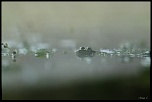 -grenouille-dans-le-brouillard_0983.jpg
