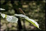 libellules et surprise