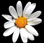 Mes Essais Fleurs
