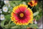 Que pensez-vous du 70-300 USM IS ?-fleurs-et-eglise-gimnee-002-800x533-.jpg