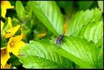 Quel écran ?-insectes-jardin-4-juillet-2012-001-640x430-.jpg