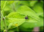 Quel écran ?-insectes-jardin-4-juillet-2012-004-640x472-.jpg
