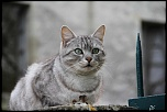 chat qui pose