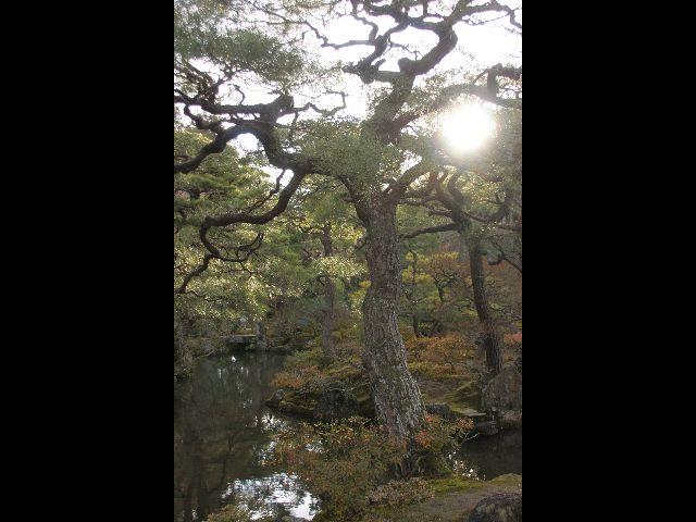 -jardin-du-temple-dargent-japon.jpg
