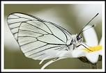 choix objectif impossible-_65d0595papillon.jpg