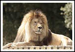 choix objectif impossible-_mg_6145the-king.jpg