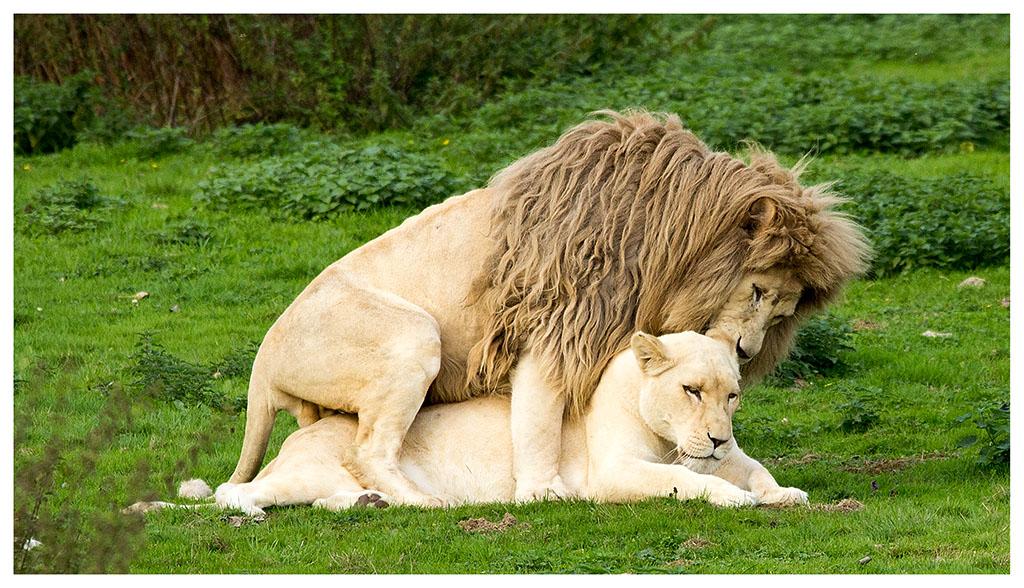 -love.jpg