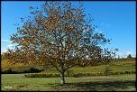 arbre seul