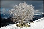 Arbre en neige