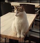 chat de bar