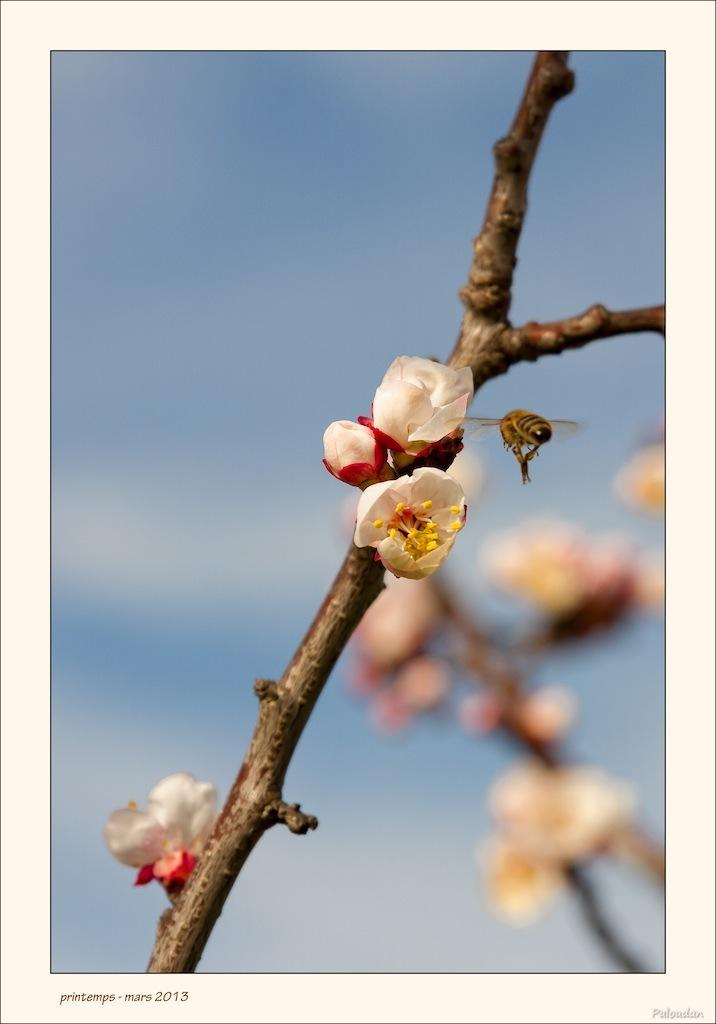 la qualite d'image-printemps.jpg