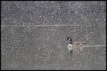 elcuzelles 30 03 2013 10 12 17 0033