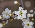 -seresville_24-03-2012-09-56-09_0026.jpg