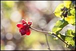 Très belle Rumeur ...-montecot_02-10-2011-10-01-52_0019.jpg