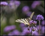Très belle Rumeur ...-limeuil_30-07-2012-15-52-20_0025.jpg