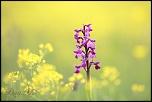 Thème du 07-06-2004 au 30-06-2004-fleur-12-mai-2013-4.jpg