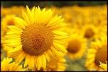 fleur foret