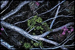 Poésie florale  Au détour d'un chemin alpin (Vallée de la Haute Clarée, France)    (Finaliste Festimages 2013)