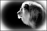 2013 cerza lion 2