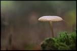 Très belle Rumeur ...-mont-cot_11-11-2013-14-34-56_0176.jpg