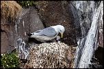 bague T ?-islande-2012-4540.jpg