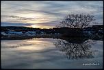 L'arbre magique de Mývatn