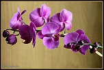 Une belle plante small