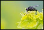 L'aspirateur à pollen