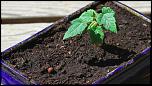 Les 10 derniers post du forum sur votre site-bonsai.png