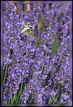 Parfum de Provence