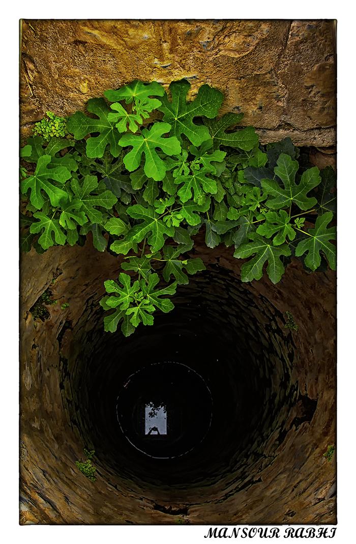 Salut-un-figuier-dans-le-puits.jpg