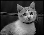 fichiers effacés : récupération-cat-3.jpg