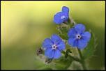 Des fleurs , tout simplement.